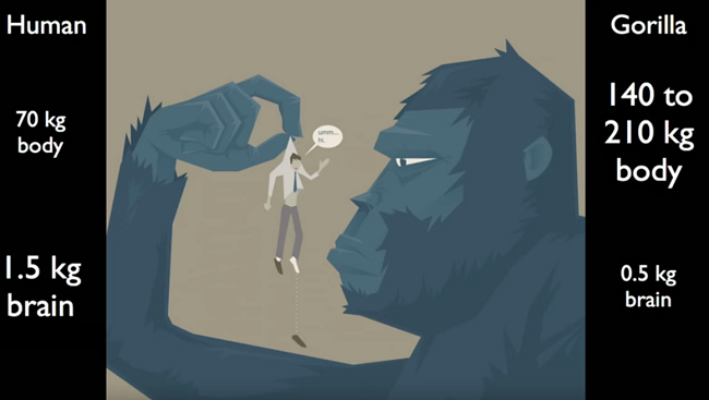 Image illustrates a large Gorilla holding a human male up by the shirt collar in examination. To left side of the illustration demonstrates in writing that the average human body weighs 70kg and with a brain weight of 1.5kg. In comparison, to the right of the image, the text states the gorilla body weighs 140kg to 210kg with a brain weight of 0.5kg.