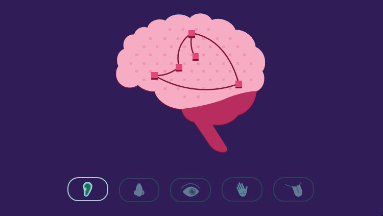 A cartoon brain with small icons below of an ear, nose, eye, hand, and tongue