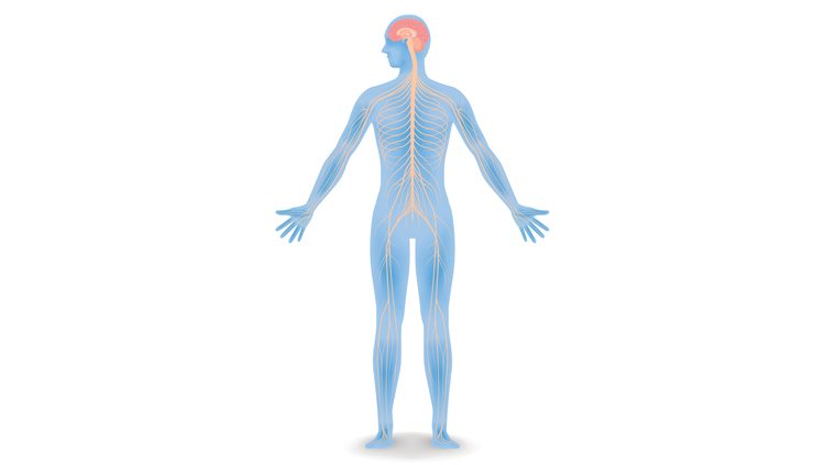 Iillustration of human blue skeleton and muscle