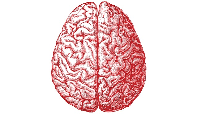 Illustration of a human brain from an aerial perspective.