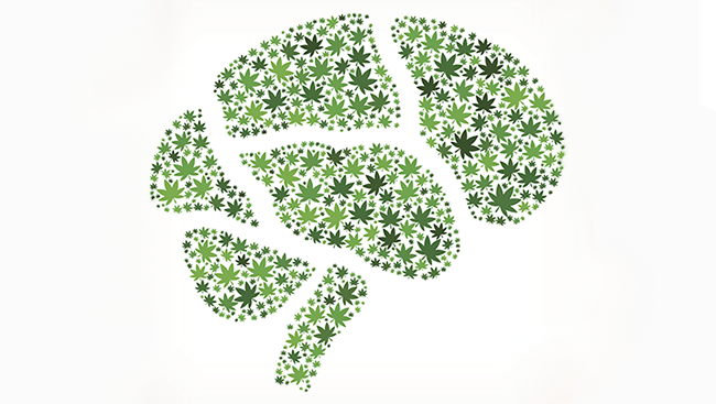 The shape of the human brain filled in with a variety of green marijuana leaves.