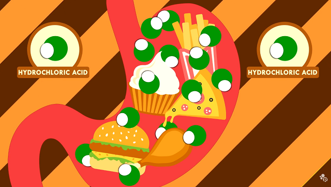 Illustration depicting a stomach full of various foods.