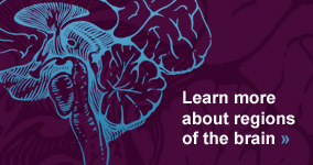 Learn more about regions of the brain.