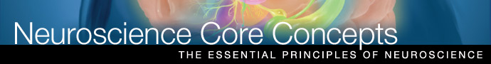 Read more about neuroscience core concepts for the U. S. National Science Education Standards.