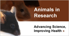 Animal research. Are mice the best tool to study addiction?