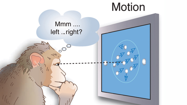 A monkey watching a screen with a moving target
