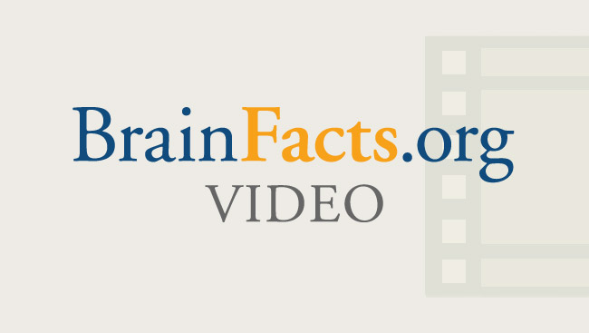 BrainFacts.org Video