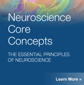 Neuroscience Core Concepts
