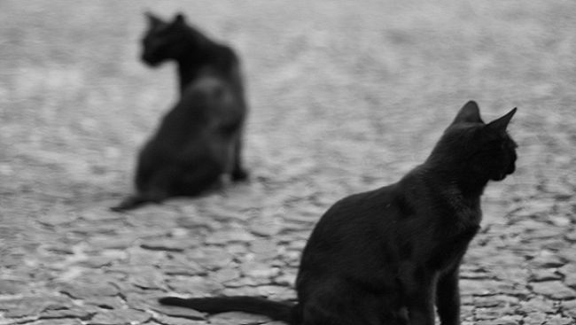 Two black cats looking over their backs at each other in a mirror-style image.