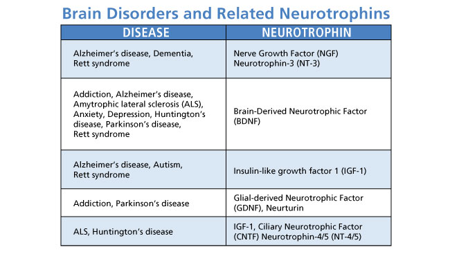 Changes in levels of growth-promoting proteins called neurotrophins are associated with many brain diseases and psychiatric disorders. Scientists continue to explore the possibility that treatments that normalize neurotrophin levels can halt or reverse the symptoms of some of the disorders listed above.