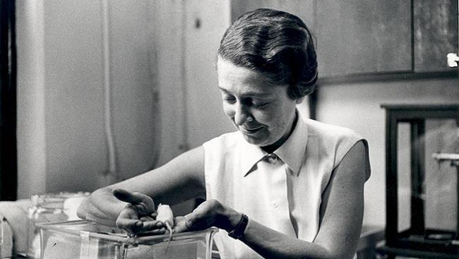 Rita Levi-Montalcini in her lab.