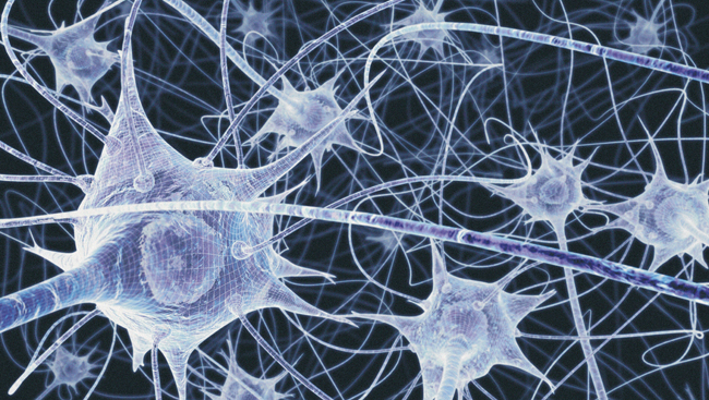 Illustration of a network of nerve cells in the brain.