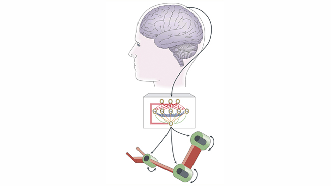 A simplified schematic shows how signals from nerve cells in the brain's motor cortex can control a prosthetic device.
