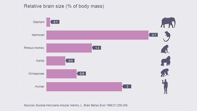 Chart demonstrating brain weight relative to body size of various animals.