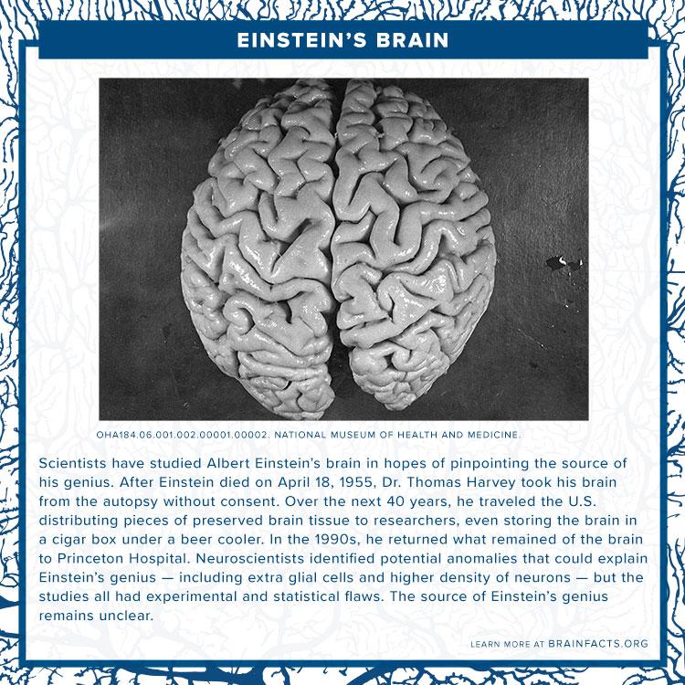 Einstein's brain Brain byte