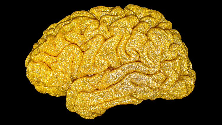 3D printed model of a brain