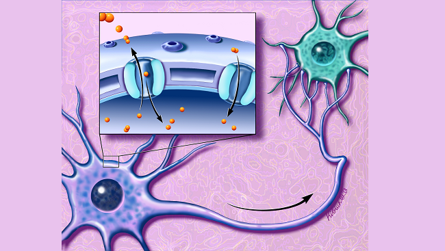 Illustration of ion channels