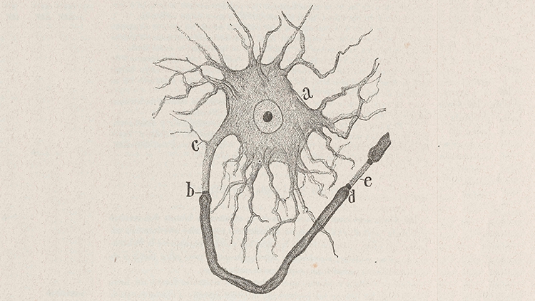Image of a famous Ramón y Cajal drawing