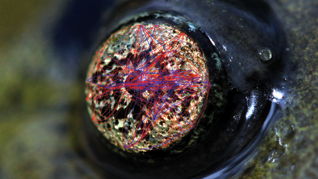 Image of the Week: Eye of the Tiger (Salamander)