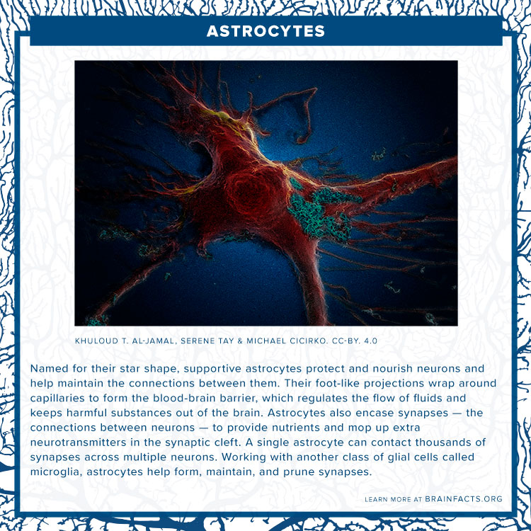 Astrocyte brain byte