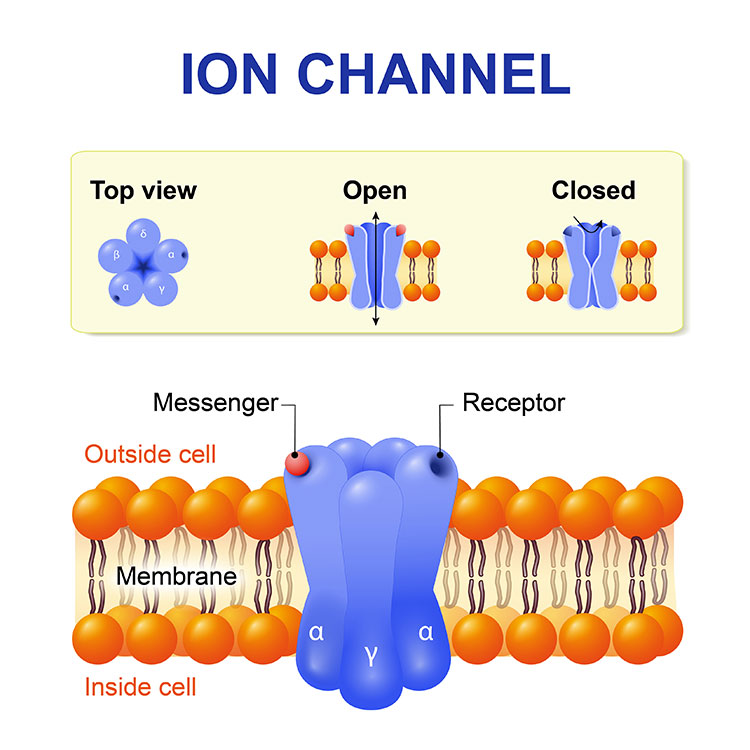 Graphic of Ion channel