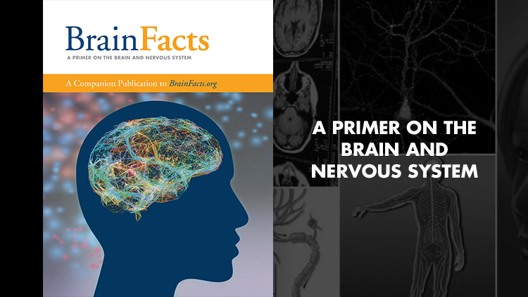 Image of the Brain Facts book