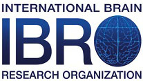 International Brain Research Organization logo