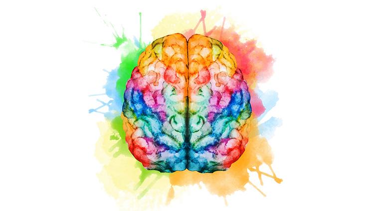 The Arts \u0026 the Brain
