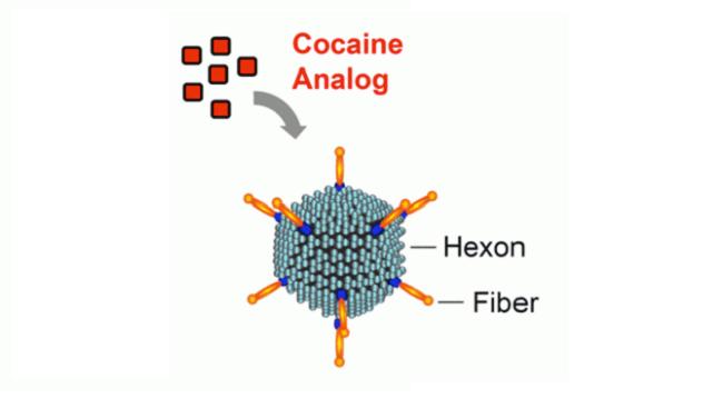 Diagram of a cocaine analog.