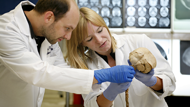 Two scientists examining a skull.