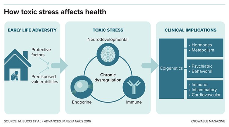 How toxic stress affects health graphic