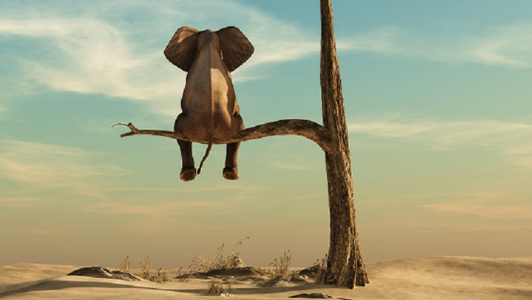Lonely elephant sitting on tree branch