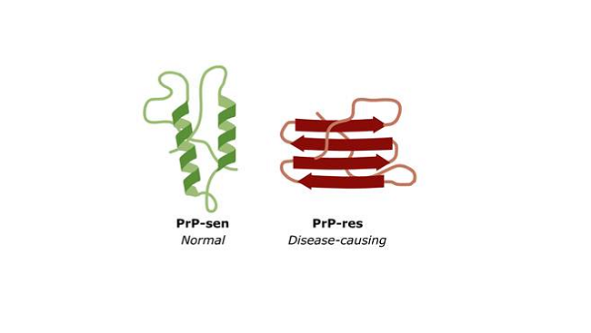 Rendering of normal and disease-causing protein folds.