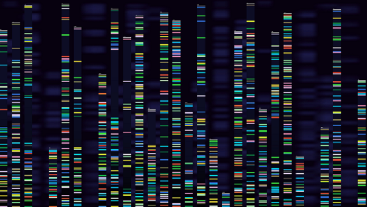 color dna image