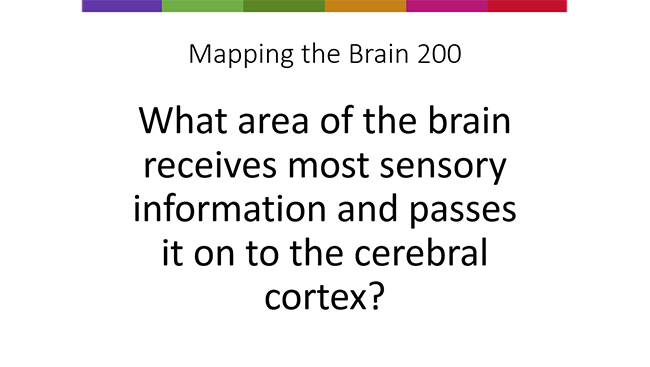 """Brain Basics Quiz showing example quiz question in the """"mapping the brain"""" 200-point category."""