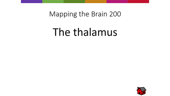 """Brain Basics Quiz showing example quiz answer in the """"mapping the brain"""" 200-point category."""