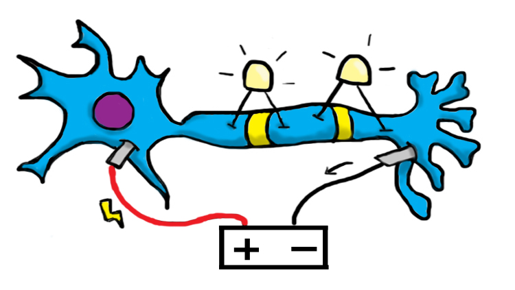 Illustration of a closed circuit neuron