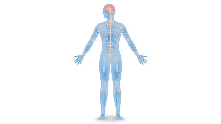 Iillustration of human blue skeleton and muscle