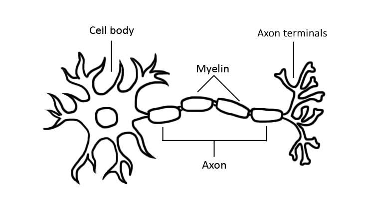 Light Up Neuron 092717