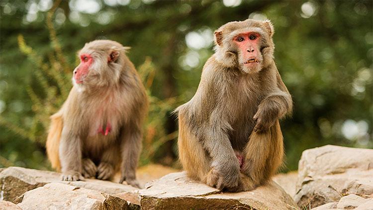 Primates sitting