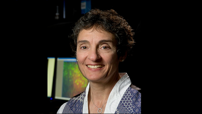 Carla Shatz, PhD, is a professor of biology and neurobiology at Stanford University, as well as the director of Bio-X.