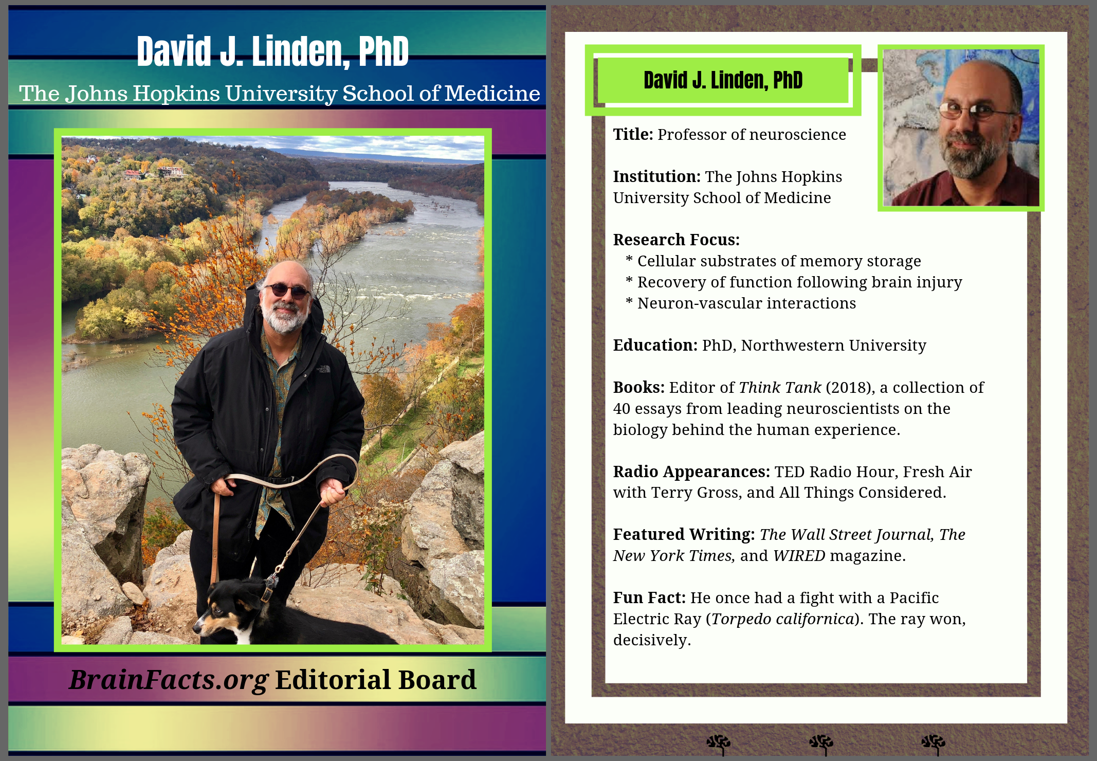 david linden with info on side