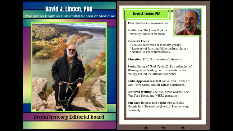 david linden card with info