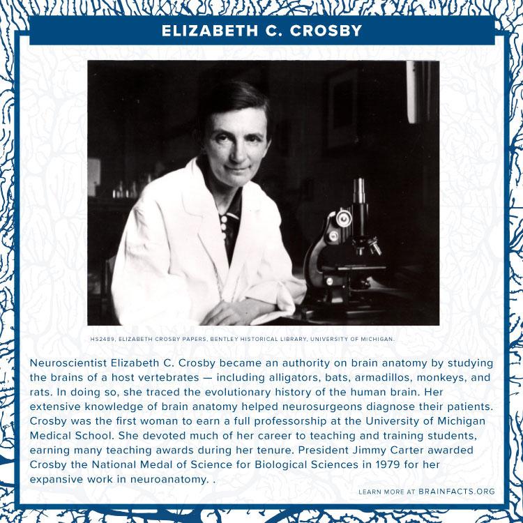 Elizabeth Crosby brain byte