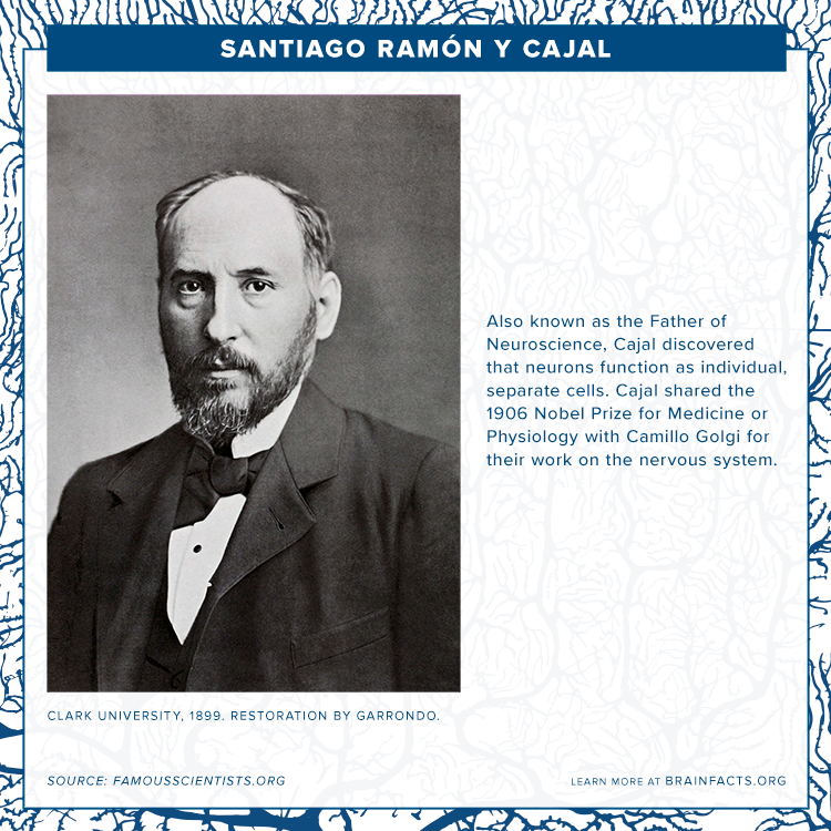 brain byte of santiago ramon y cajal