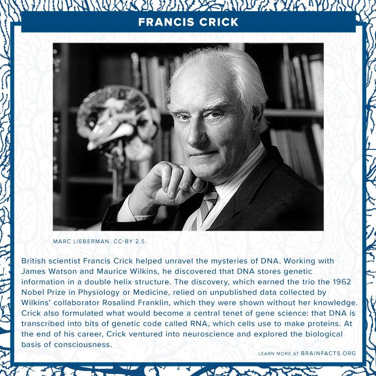 Francis Crick brain byte