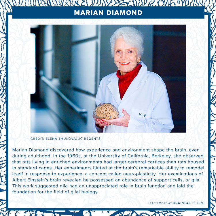 brain byte of marian diamond