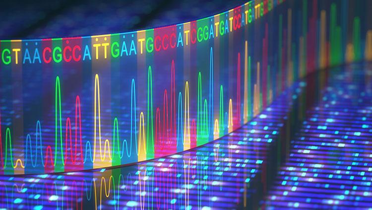 Rett syndrome gene