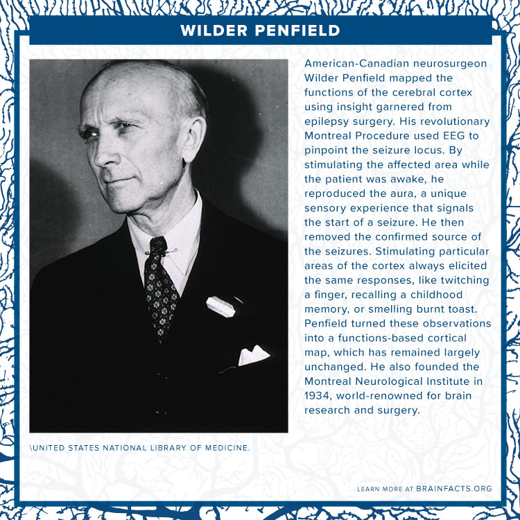 Wilder Penfield brain byte