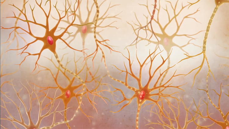 Research Identifies Complex Of Neurons >> The Tools That Let Neuroscientists Study And Even Repair Brain